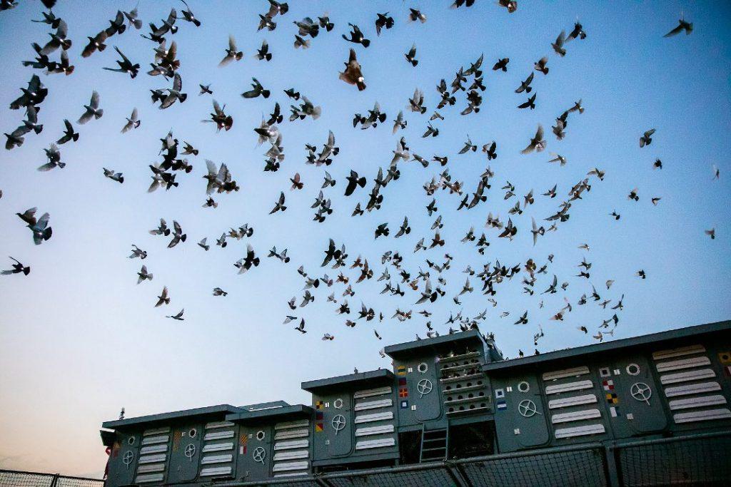 [cml_media_alt id='2450']Fly by Night Photo: Tod Seelie[/cml_media_alt]